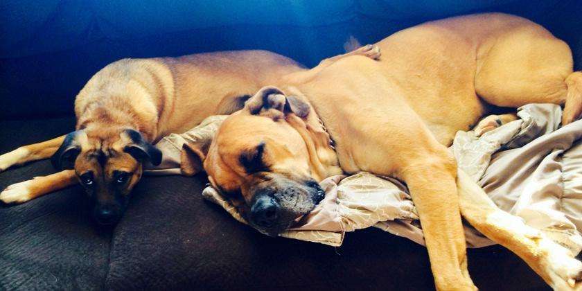 jesse_couch_dogs
